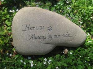 Harvey - Deloise